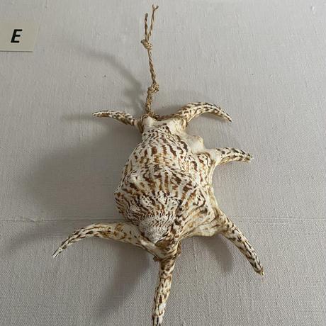 種水土花 水字貝(魔除け)