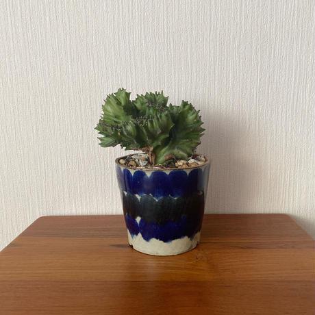 深貝工房 別注4寸植木鉢