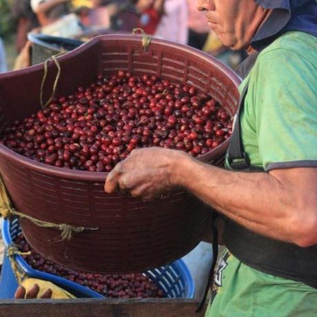 【生豆】コスタリカ エル・ガルシラソ農園 セントロアメリカーノ種 レッドハニー 1kg