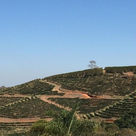 ブラジル パッセイオ農園 「ムンドノーボ」中煎り 200g