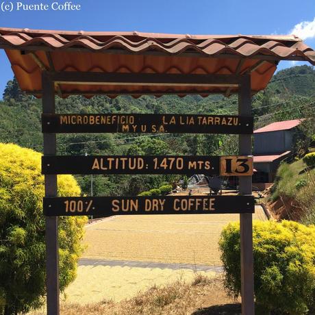 コスタリカ ラ・リア サンロレンソ農園 「サンロレンソE47」中浅煎り 200g