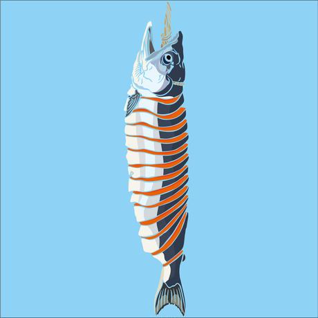 新巻鮭/ ボディカラー:ライトブルー