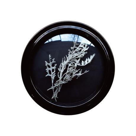 Convex Glass Case  DF (L)