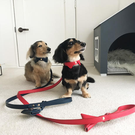 Red collar&lead set