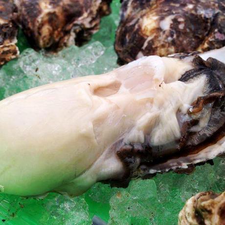宮城県・雄勝産『深海牡蠣』特大サイズ 殻付き15個セット
