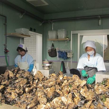 【産直】ブランド荒波牡蠣 『剥き身』 500g