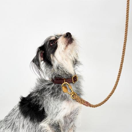【Found My Animal /ファウンドマイアニマル】OMBRE DOG COLLAR    (オンブレドッグカラー)首輪 Moodringムードリング