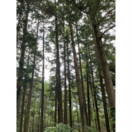 日本の天然木でつくった 鍋敷き