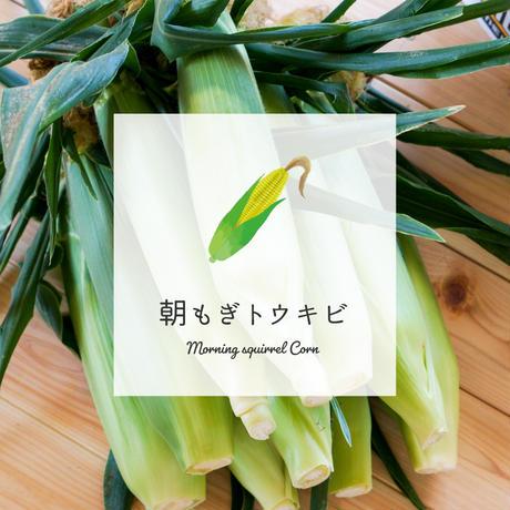あさもぎトウキビ30本セット【人気No.1】