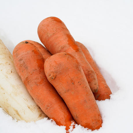 雪の下であまくなった野菜と冬に寝かせたおいものセット