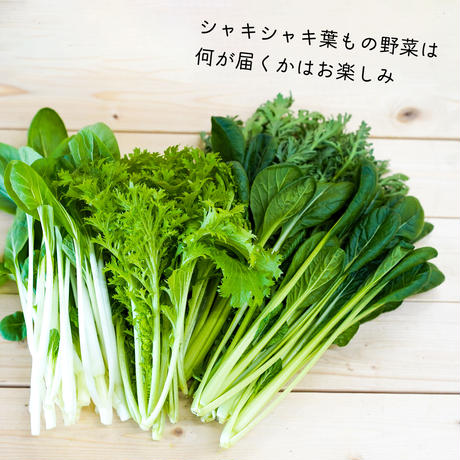 楽園倶楽部の春のおすすめ旬野菜セット