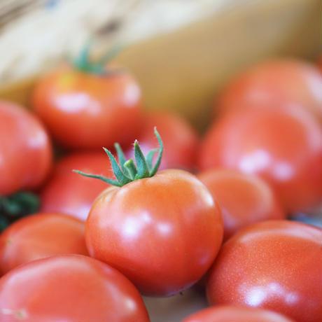 きたいろトマト (フルーツトマト&大玉トマト) ミニパックセット