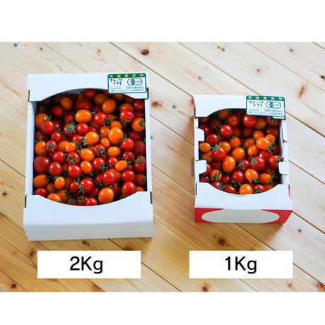 きたいろトマト (フルーツトマト) 2kg
