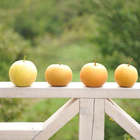 高崎里見梨食べ比べ4種セット
