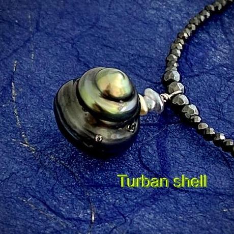 Turban shell(ターバンシェル)
