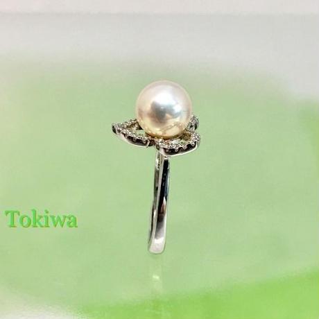 Tokiwa(トキワ)