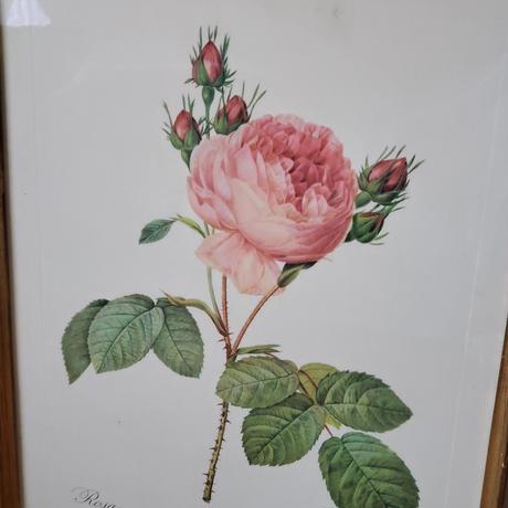 ルドゥーテのローズ画