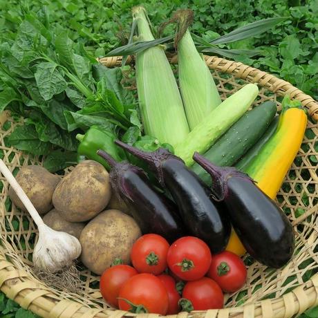 野菜宅配セット(小) 2~3人向き 送料無料