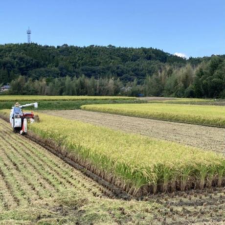 釈迦院水系で育てたお米(白米と玄米セット) 各5kg