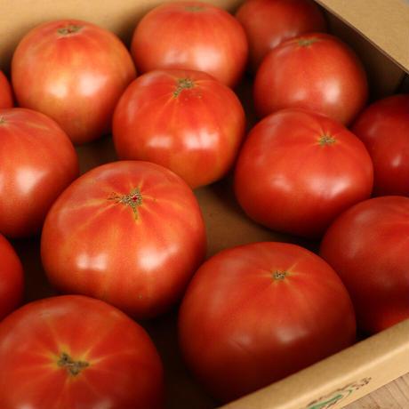 甲佐産朝どりトマト 4kg相当