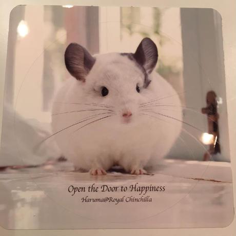 【春馬】ステッカー <Open the door to happiness ~幸せの扉を開けて~>