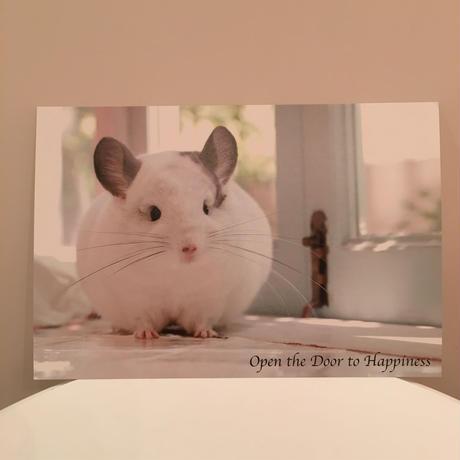【春馬】ポストカード<Open the door to happiness ~幸せの扉を開けて~>