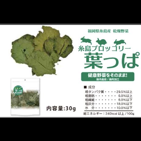 サンコー 糸島のブロッコリーの葉