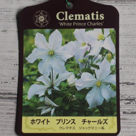 クレマチス ホワイト・プリンス・チャールズ