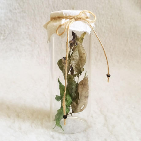 Dried Flower Deco-C