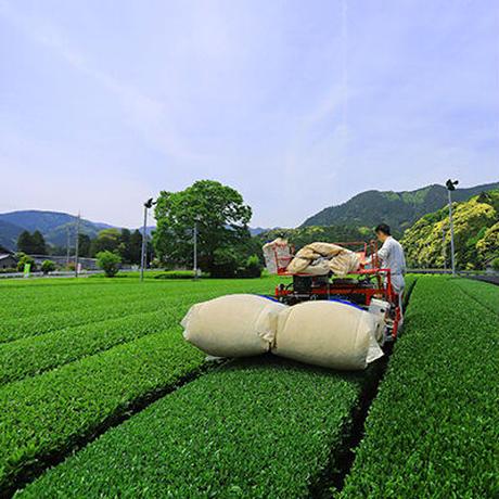 薬膳茶 緑茶 (メール便)