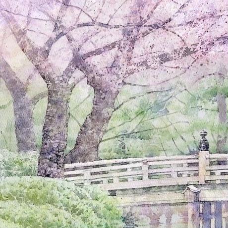 みやび桜(金沢・兼六園) 大きな作品です