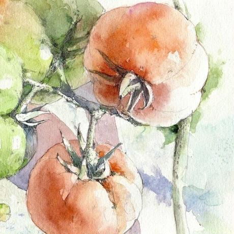 輝く朝・Tomato