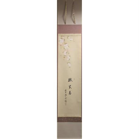 戸上明道筆 枝垂桜画賛「微笑春」掛軸【新品】