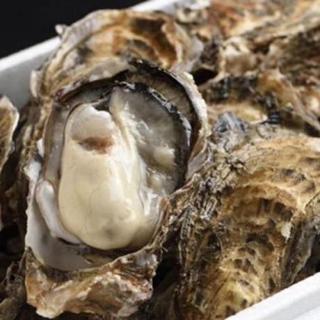 【漁師直送】厚岸産 殻付き牡蠣 LL  20個入り