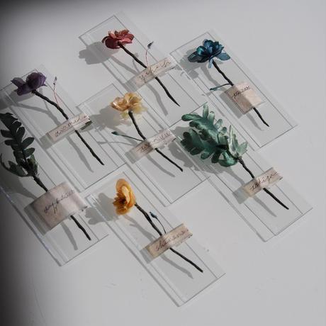[ はじまりの花標本 - object ] color - 紫