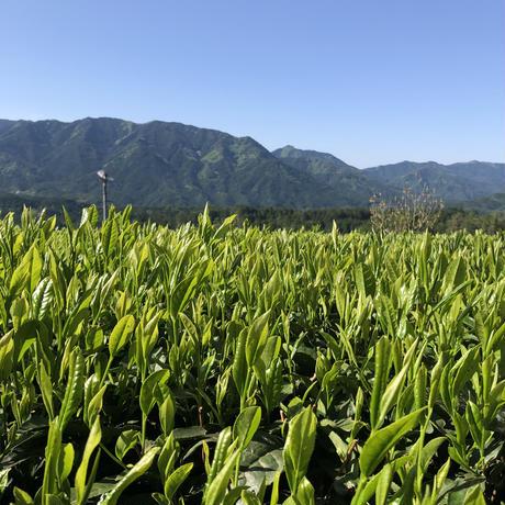 2021年 新茶 生仕上げ 手摘みやぶきた 東白川村