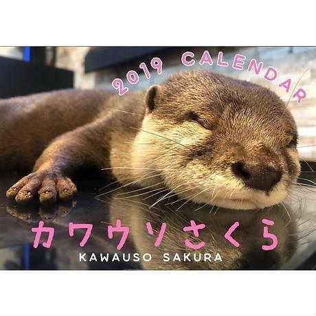2019年  カワウソさくら 壁掛けカレンダー