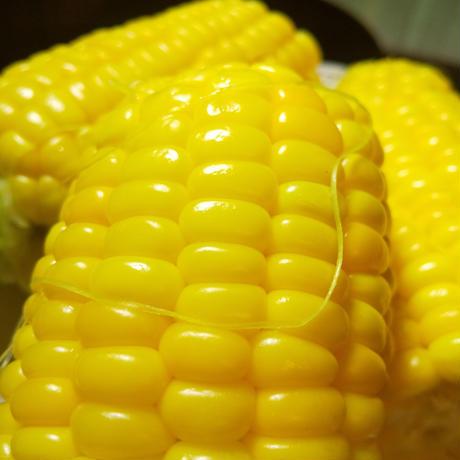 トウモロコシ5本セット