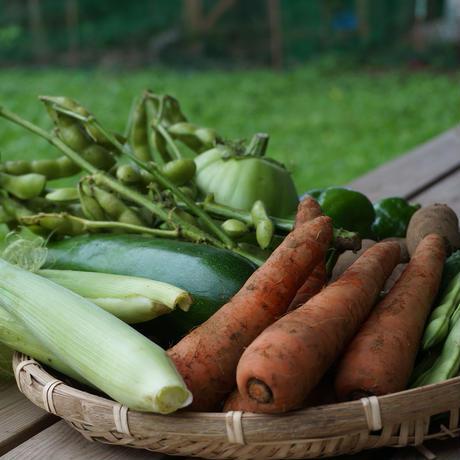 おためし野菜セットS 2回分(送料1回分無料)