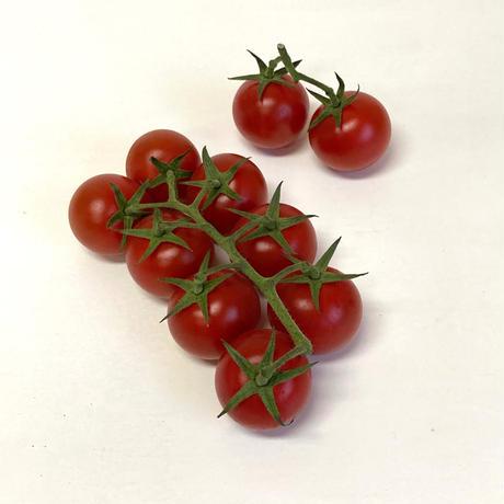 ポーチ [トマト] 赤 / Zipper Pouch -Vine tomatoes-