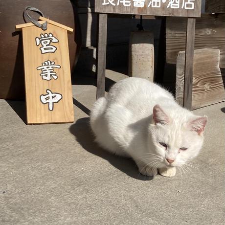 【ゆずニャーニャレード】吹屋の白猫をイメージした可愛い柚子マーマレードです。