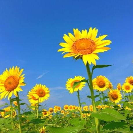 【夏の日】Piano solo score