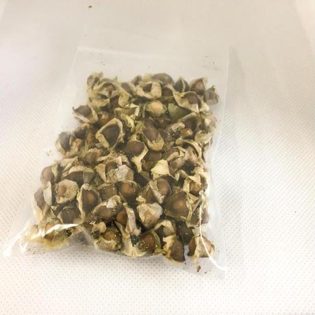 モリンガの種200粒+α