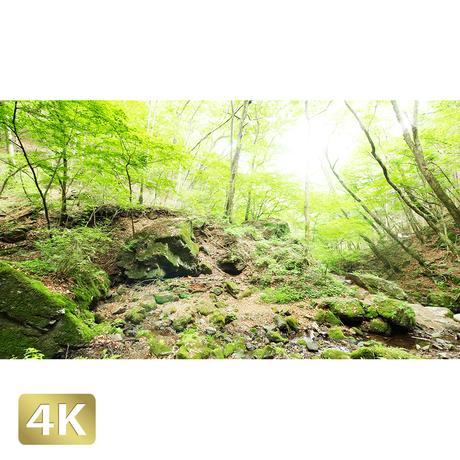 1037029 ■ 御岳山 ロックガーデン
