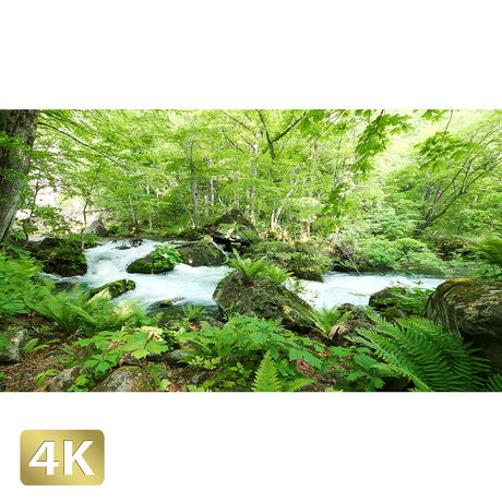 1035033 ■ 奥入瀬渓流 石ヶ戸の瀬