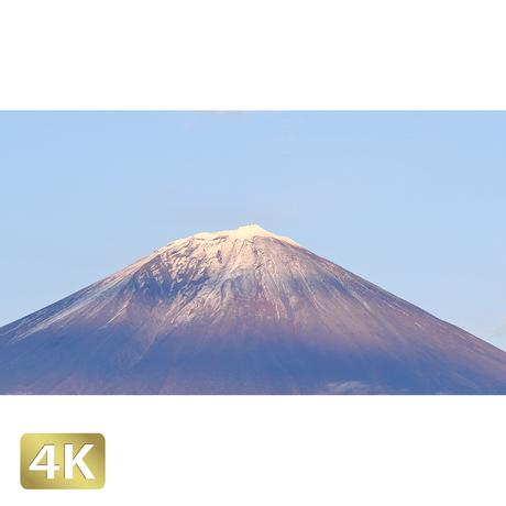 1016021 ■ 富士山 紅葉