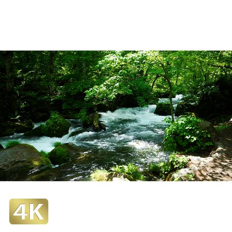 1035015 ■ 奥入瀬渓流 阿修羅の流れ