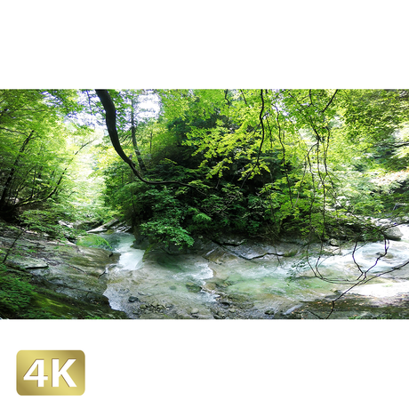 1010003 ■ 西沢渓谷 三重の滝