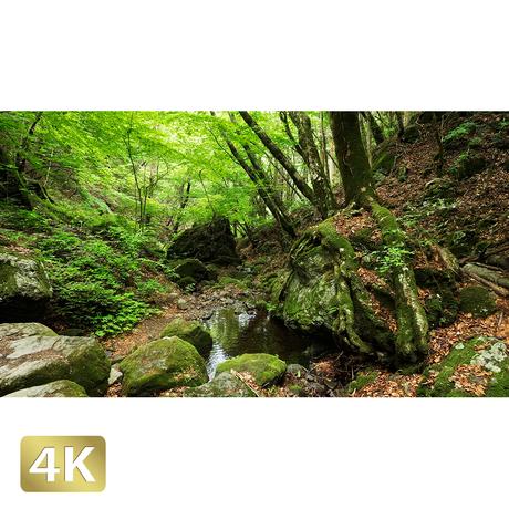 1037031 ■ 御岳山 ロックガーデン