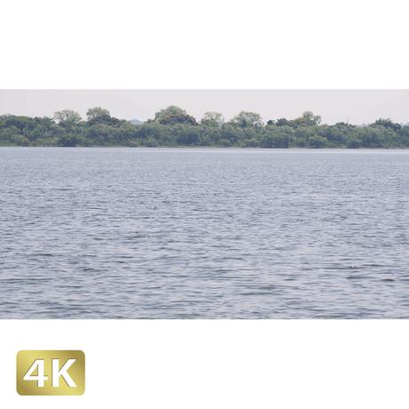 1034002 ■ 渡良瀬遊水池 池